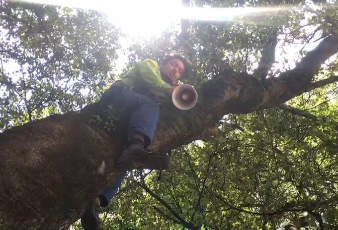 Hombre protesta contra licencias en le páramo de San Turbán, trepado en un árbol.
