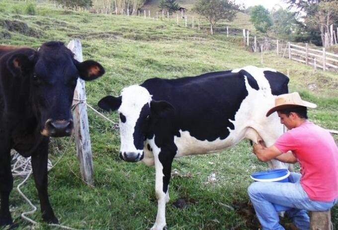 Productores lecheros