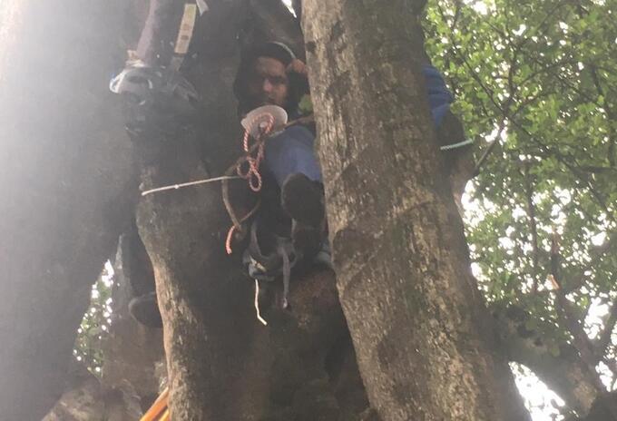 Ambientalista adelantando huelga de hambre colgado de un árbol, en Bogotá