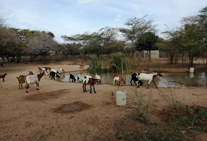 La Guajira sin agua