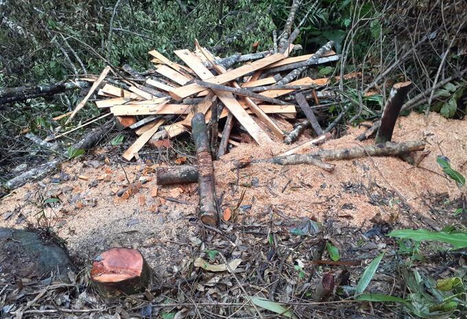 Deforestación durante la cuarentena en Antioquia.