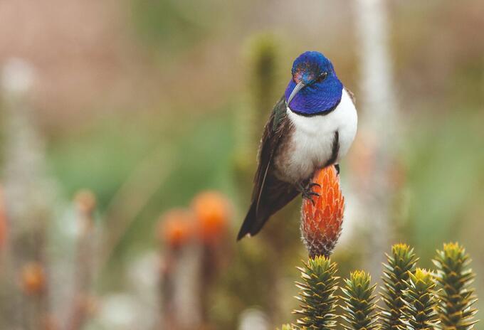 """""""paraíso de los colibríes"""