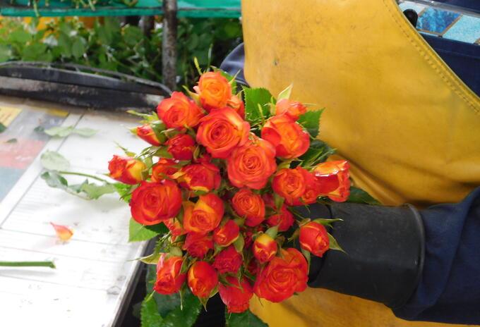 Empresa exportadora de flores colombianas.