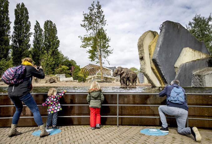 Coronavirus en Países Bajos / Zoológico en Amsterdam