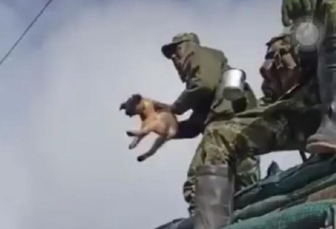 Soldado que maltrató al perro