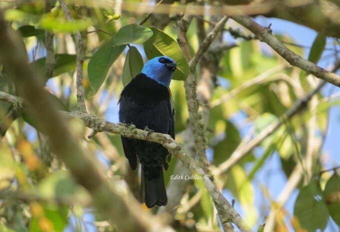 Especie de ave en Cundinamarca.