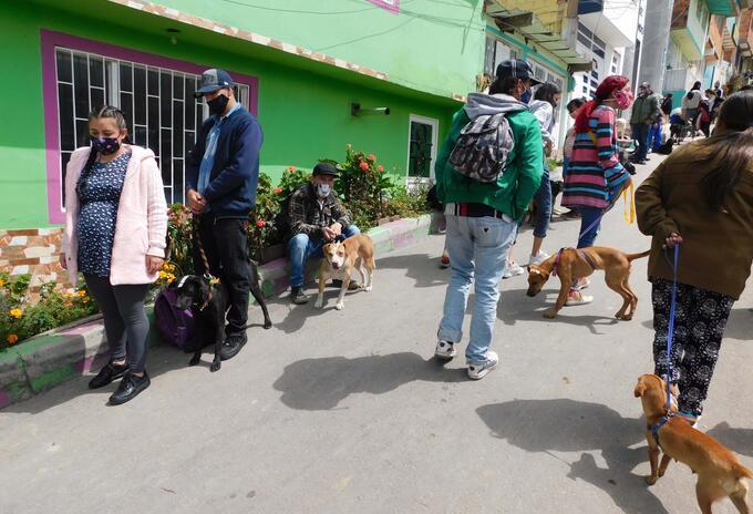 Perros y gatos en Bogotá.