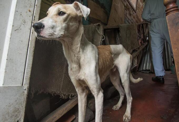 Más de veinte perros, gatos y palomas estaban cruelmente confinados en vivienda de Bogotá.