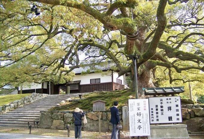Los árboles que sobrevivieron a la bomba atómica