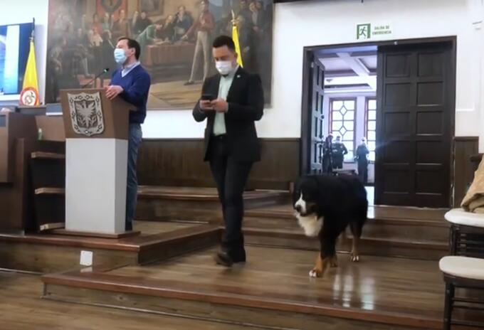 Perro en el Concejo de Bogotá