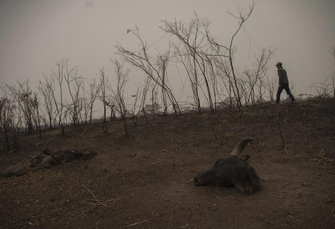Incendio en humedal de Brasil.
