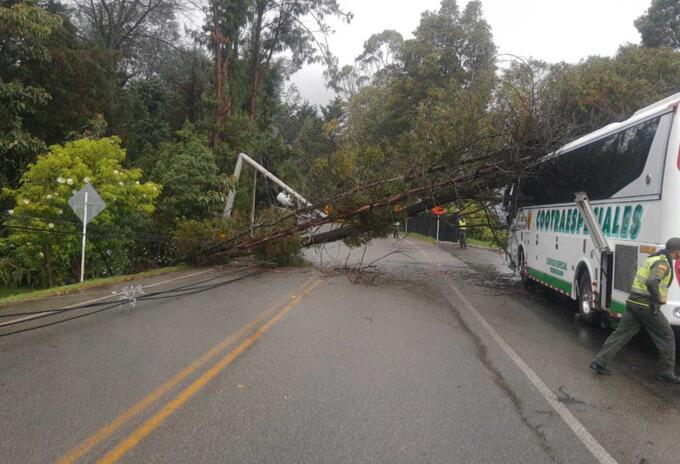 Caída de árbol en la variante Las Palmas.