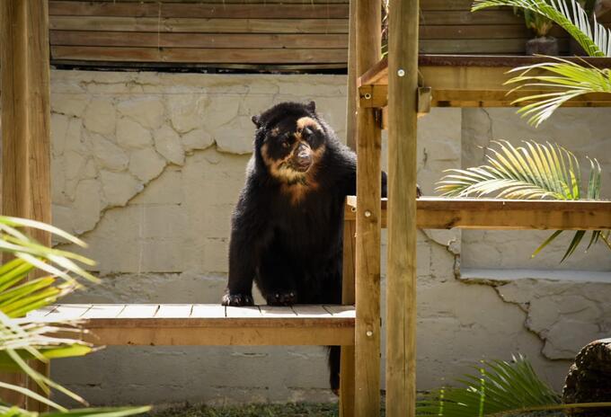 Crean Subsecretaría para la protección animal en Medellín