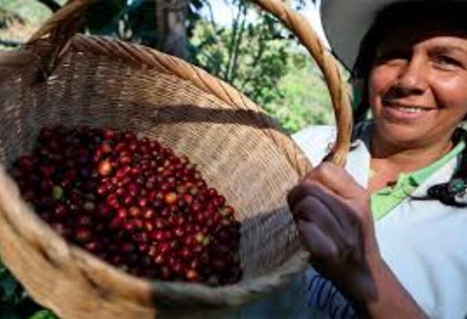 Día Internacional del Café, Boyacá, Himno