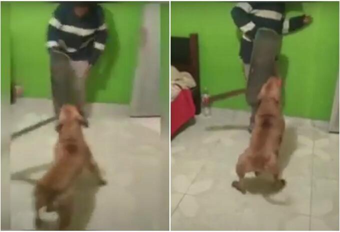Perro ataca con machete