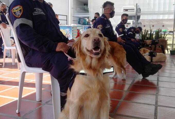 El equipo de búsqueda y rescate Canino K-SAR está presente en cuatro municipios de Caldas.