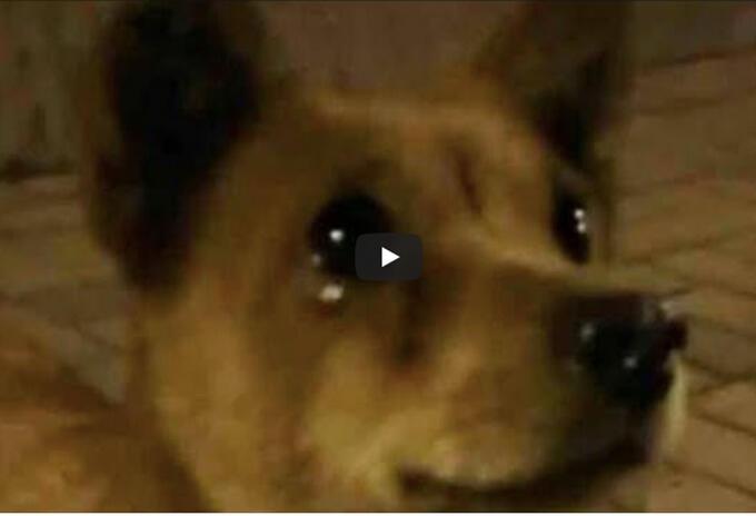 Perro llora al recibir alimento