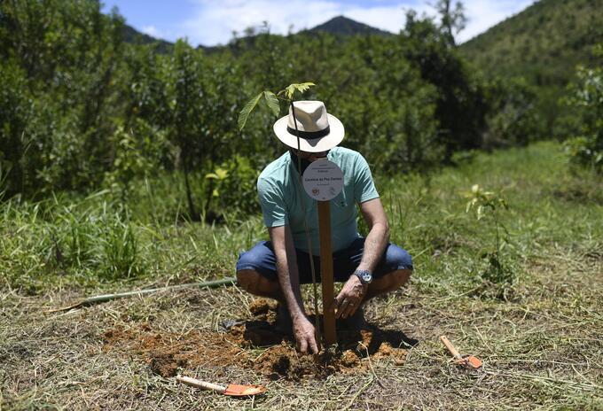 Siembra de árboles en Brasil por cada persona muerta de covid-19.