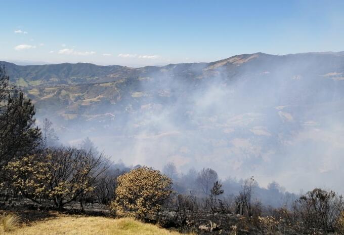 Incendio, Betéitiva, Foresta
