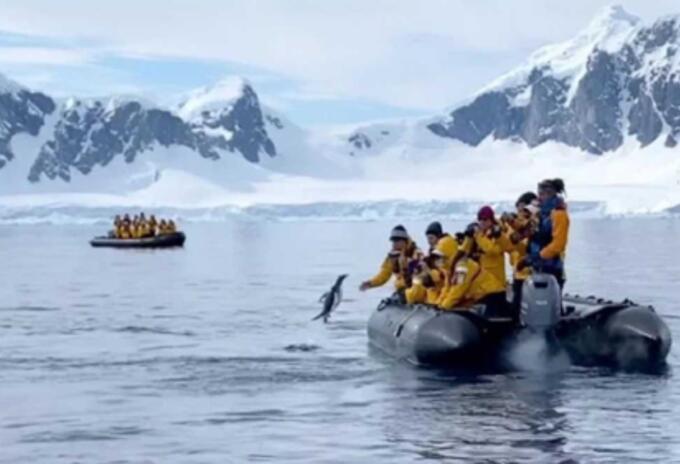 Pingüino salta a bote