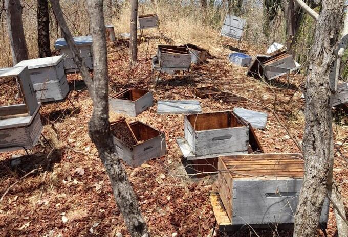 Es la sexta vez que roban la miel pero primera vez que asesinan a las abejas
