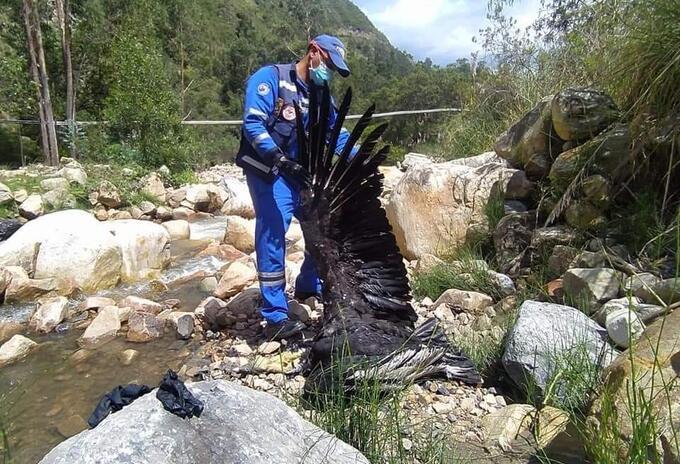 Condor muerto