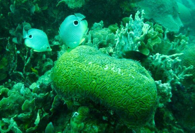 Corales en los mares de Colombia.