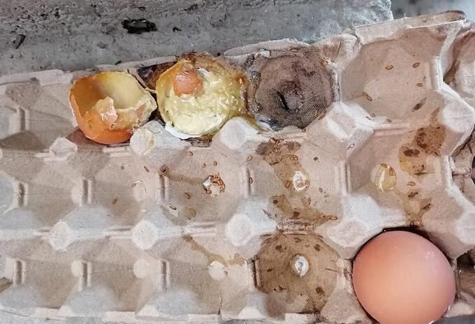 Huevos descompuestos.