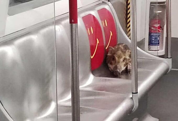 Habalí en metro de Hong Kong