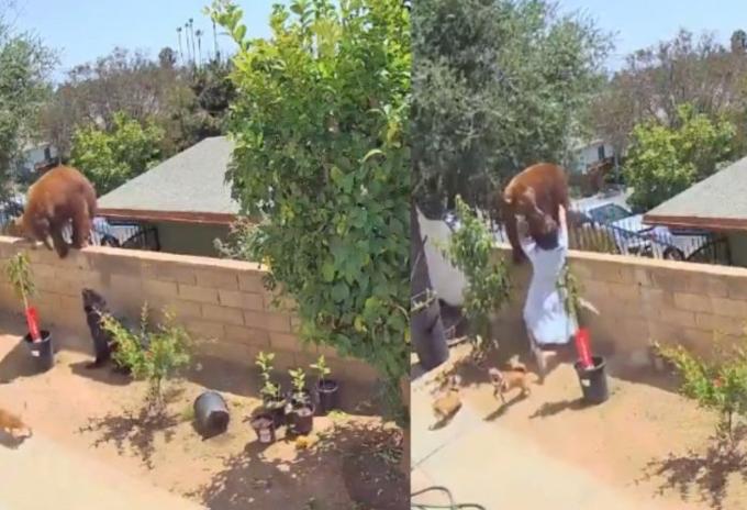 Mujer salva a sus perros de un oso