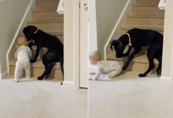 Perro impide paso a bebé en escaleras