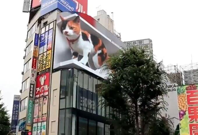 Gato 3d en Shinjuku