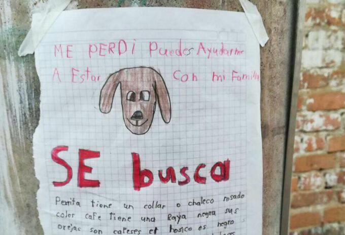 Con este anuncio buscaban a la perrita Lulú