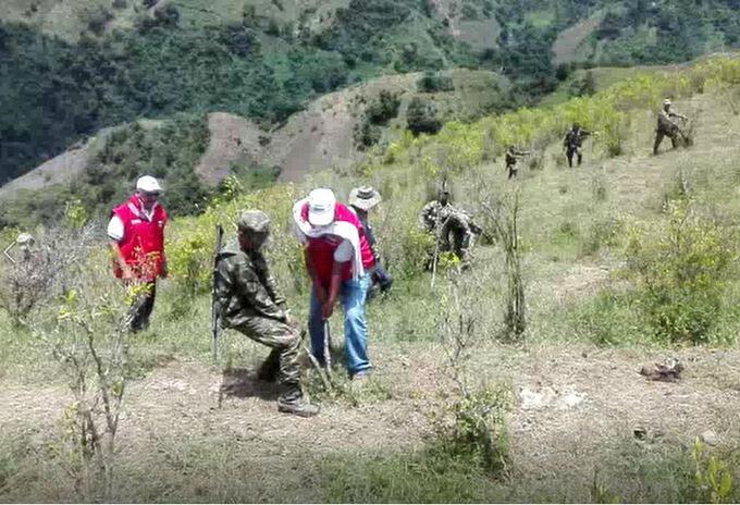 Erradicación de cultivos ilícitos.